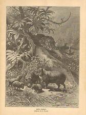 Leopard, Stalking Nutria, Jungle Scene, German, Vintage 1891 Antique Art Print,