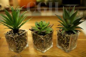 Faux Succulent Plants Glass Pots Bathroom Kitchen Modern Artificial 20cm