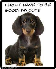 Dachshund Puppy Funny  Refrigerator / Tool Box  Magnet