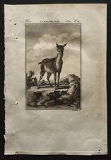 1799 - Buffon - L'antilope femelle - Gravure zoologie