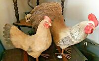 Gorgeous Vintage Pair of Lifesized Handmade Straw Hen & Cockerel Figures VGC