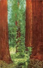 California postcard Muir Woods National Monument Mill Valley big trees tree