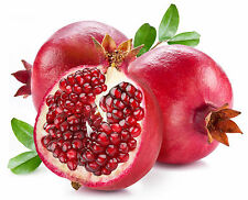 "Pomegranate ""Kashmir Blend"" 10 Finest semi-liveseeds"