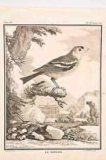Histoire Naturelle Oiseaux Buffon v 1780 Legrand-De Sève le PINSON