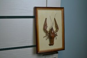 Stuffed cancer Taxidermy crayfish Wall table mounted  composition Fish taxidermy