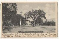 Orange Grove Ave PASADENA CA Large Oak Tree Vintage 1905 Ashfork RPO Postcard