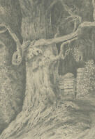 Mid 19th Century Graphite Drawing - Study of a Knarly Tree