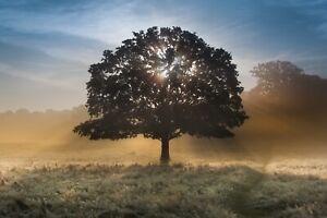 Fototapete BAUM-VLIES (2857E)-Wald Birkenwald Birkenbäume Bäume Nebel Landschaft