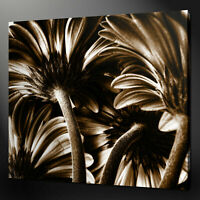 SEPIA GOLD GERBERAS FLORAL DESIGN CANVAS PRINT READY TO HANG