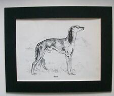 Saluki Dog Print Gladys Emerson Cook Bookplate 1962 8x10 Matted Adorable