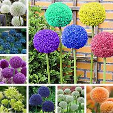 Egrow 100 PCS Garden Outdoor Giant Allium Giganteum Beautiful Flower Seeds Bons