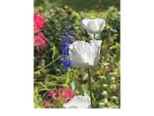 "PAPAVER S0MNIFERUM ""TURKISH WHITES"" **25,000 SEEDS** FASTEST GERMINATING POPPY"