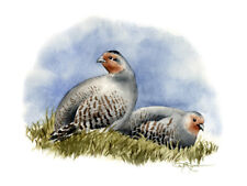 GRAY PARTRIDGE Painting BIRD ART 8 x 10 Print Signed by Artist DJR