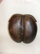 Early 19th C. Coco De Mer Seychelles Nut Rare  Double Coconut side box