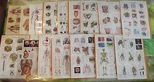 Lot de 40 Documents planches sur l'Anatomie Humaine Chirurgie visage coeur ,orga