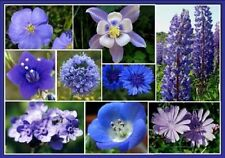 Wildflowers Singing' the Blues Mix 250  Seeds  Garden Seeds 2u