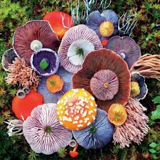 CEACO Mushrooms Agaric Puzzle - 750 Pieces FREE Puzzle Poster included