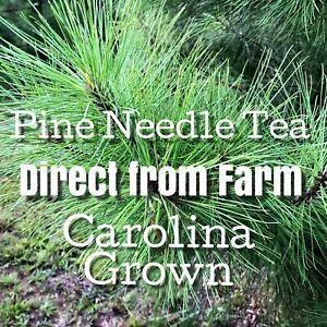 Pine Needle Tea Fresh Cut Eastern White Pine Pinus Strobus SC Grown 1/2 ozSample