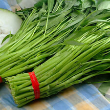 400pcs Hot Sales Vegetable Seeds Water KANG Plant Leaf Greens SPINACH Garden