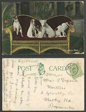 Wildt & Kray Dog Collectable Animal Postcards