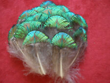 lot de 10 plumes vertes de corps paon confection mouche