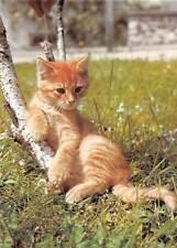 Hauskatze House Kitten Cat