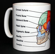 Skull Anatomy Medical Student Doctor Gift Mug