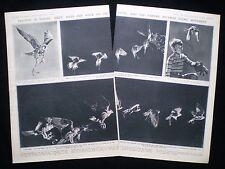 BIRD HIGH-SPEED PHOTOGRAPHY GJON MILI PROFESSOR ALEXANDER BARRETT KLOTS 2pp 1943