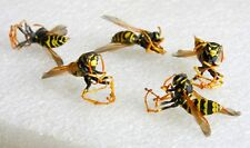 5 Real Yellow Jacket Wasp School Science Project DRYED SPECIMEN INSECT TAXIDERMY