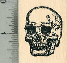 Human Skull Rubber Stamp, Anatomy Biology Series G34302 WM