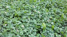 WMS Perennial Plus Deer Food Plot 9 lbs!Treated w DeltAg Seed Coat Plants1 Acre