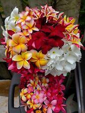 10-pk.multi-tipped Hawaiian Plumeria Cuttings