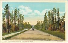 Postcard - Christmas Tree Park - Yellowstone. Unposted. J E Haynes
