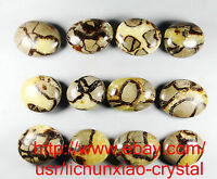 Natural Polished DRAGON SEPTARIAN Crystal Gem Stone Healing (8pcs-15pcs) 2.2lb