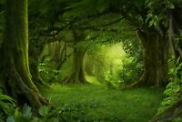 A1 | Magical Green Forest Poster Art Print 60 x 90cm 180gsm Trees Fun Gift #8294