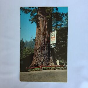 World Famous Tree House Hollowed out by fire 300 years ago Unposted Postcard