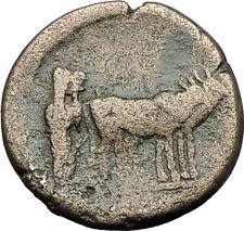 AUGUSTUS 27BC Philippi Macedonia PRIESTS Founding City Oxen Roman Coin i59395