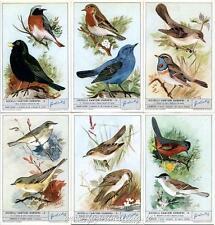 Chromo Liebig Sang. 1771 ITA Uccelli Cantori Europei II ANNO 1961