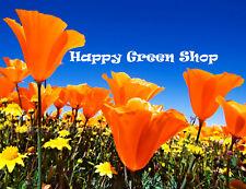 CALIFORNIAN POPPY GOLDEN WEST - 2100 SEEDS - Eschscholzia californica - FLOWER