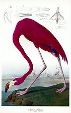 Audubon Flamingo 30x44 Hand Numbered Edition Fine Art Print