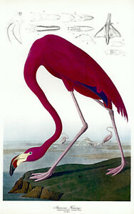Audubon Flamingo 30x44 Hand Numbered Edition Fine Art Print