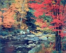 Red Trees and Rocks With Stream in Forest Nature Wall Decor Art Print (8x10)