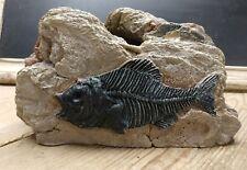 Large Fossil Prehistoric Fish Rock Cave Aquarium Fish Tank Ornament Decor