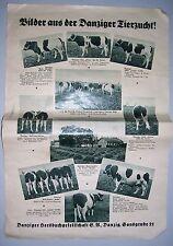 Zeitungsbeilage Danzig er Herdbuchgesellchaft Schweinezucht Viehzucht um 1935 !