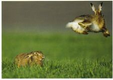 "Ansichtskarte: ""fliegender"" Feldhase mit Publikum - ""flying"" hare"