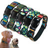 Fashion Dog Collars Soft Neoprene Padded Heavy Buckle for Yorkie Labrador S M L