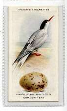 (Jk337-100) Ogdens,British Birds & Their Eggs,Common Tern,1939 #43