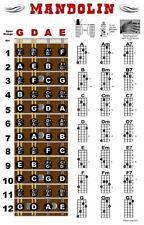 Mandolin Chord Fretboard Instructional Wall Chart Poster Notes Beginner Chords