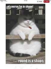 "Funny Cat  refrigerator magnet 3 1/2x 3 1/2"""