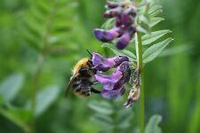 Wild Flower Butterfly Bee Seed Mix Summer Flowering Easy Maintenance Garden Lawn